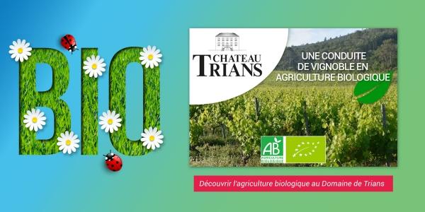 Création : visuel & publication Facebook (Domaine de Trians)